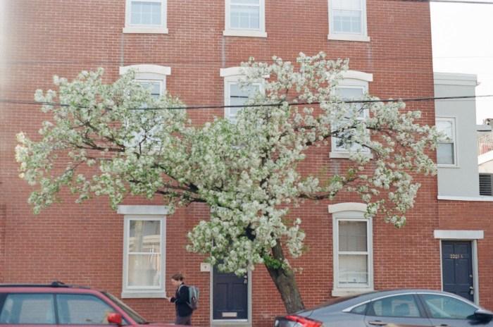 Spring Tree