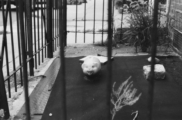 One-Eyed Pig