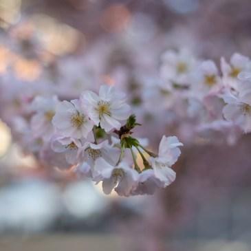 Spring Walk with My Canon EOS 5D Mark IV