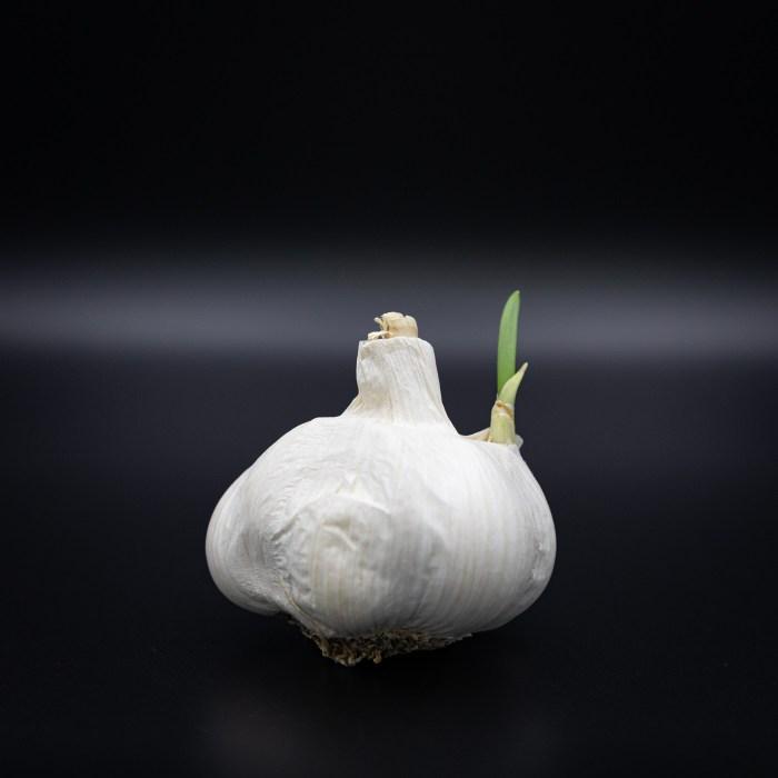 Sprouting Garlic