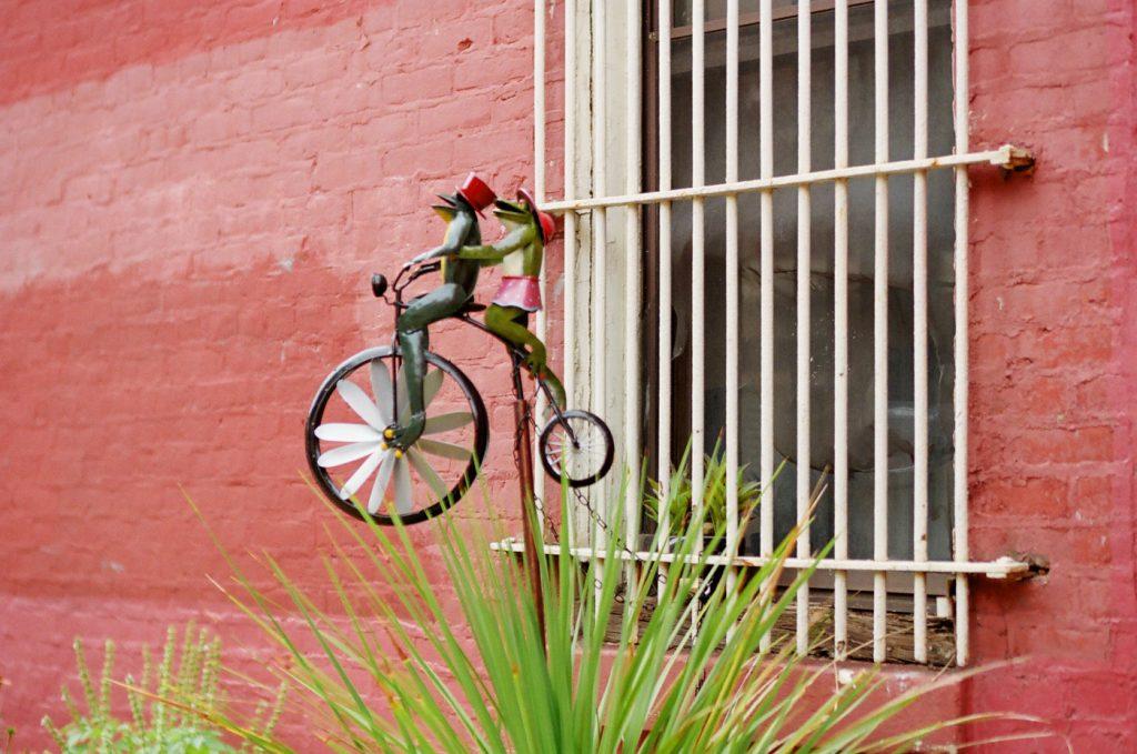 Frogs on a Bike