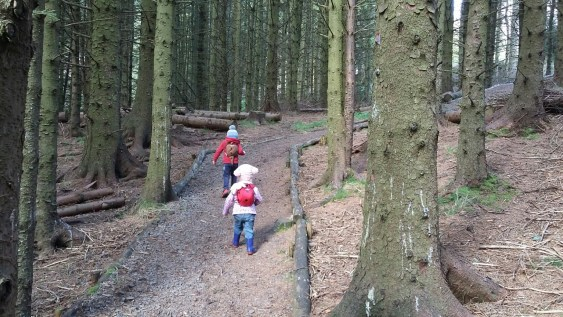 exploring-the-woods-with-your-young-kids