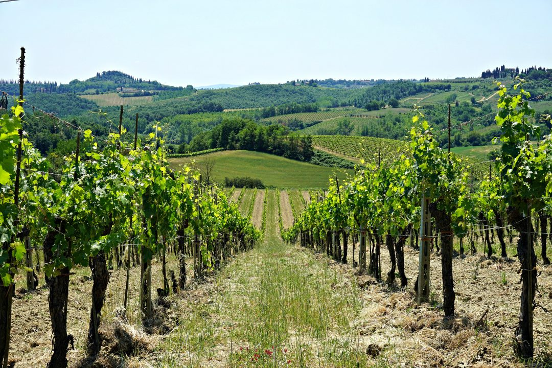 Organic Tuscan lunch at Fattoria Poggio Alloro