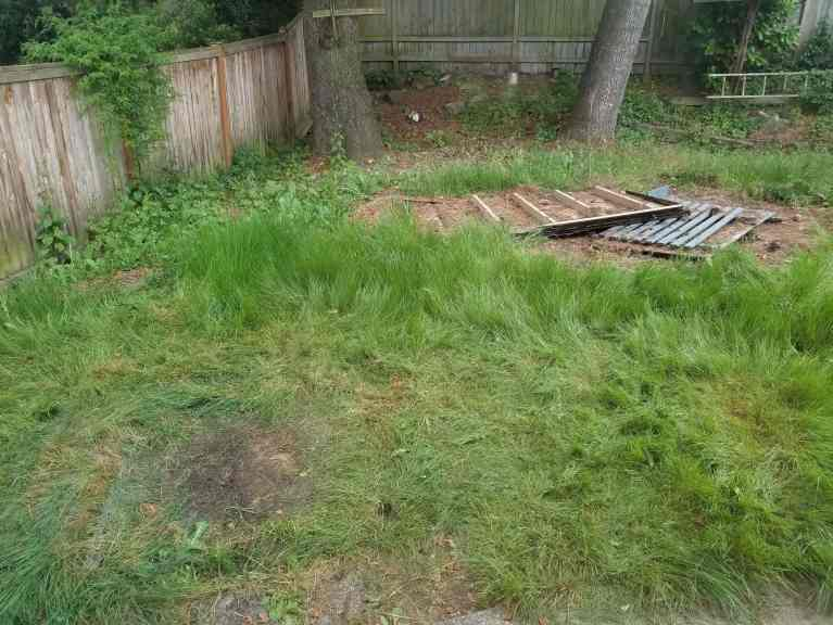 A before photo of a yard with overgrown grass.