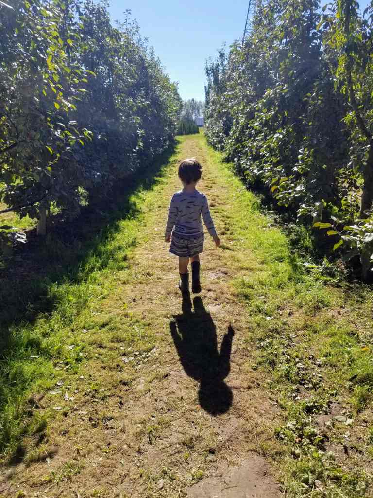 Boy in apple orchard.