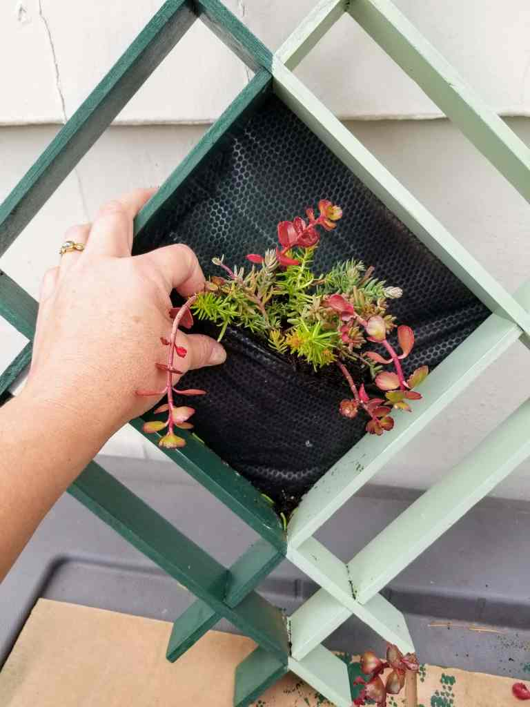 Hand filling hanging planter with succulent plants.
