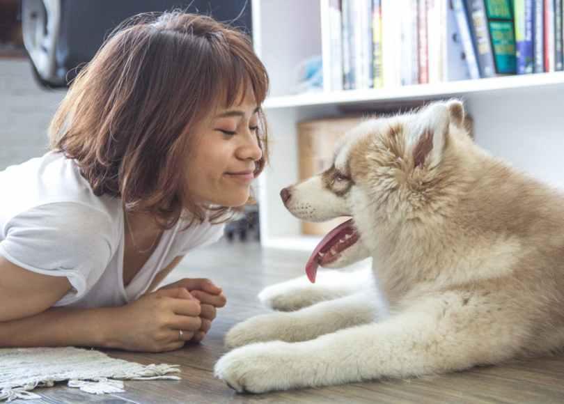 pet care / dog walker