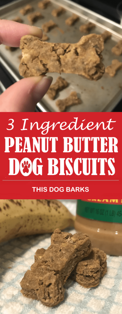 This easy dog biscuit recipe uses only 3 ingredients and couldn't be simpler! Made with banana, peanut butter and a can of garbanzo beans, this delicious peanut butter dog biscuit recipe is grain-free and costs just pennies to make.