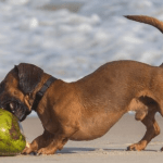 6 Surprising Benefits Of Coconut Oil For Dogs (And Recipes Your Dog Will Dig!)
