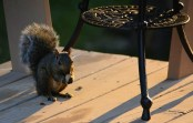 Mmmm, peanut.