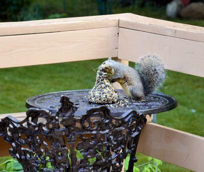 DSC_5463_20140819_squirrel