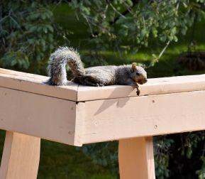 DSC_5468_20140819_squirrel
