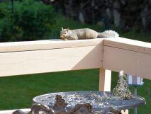 DSC_5475_20140819_squirrel