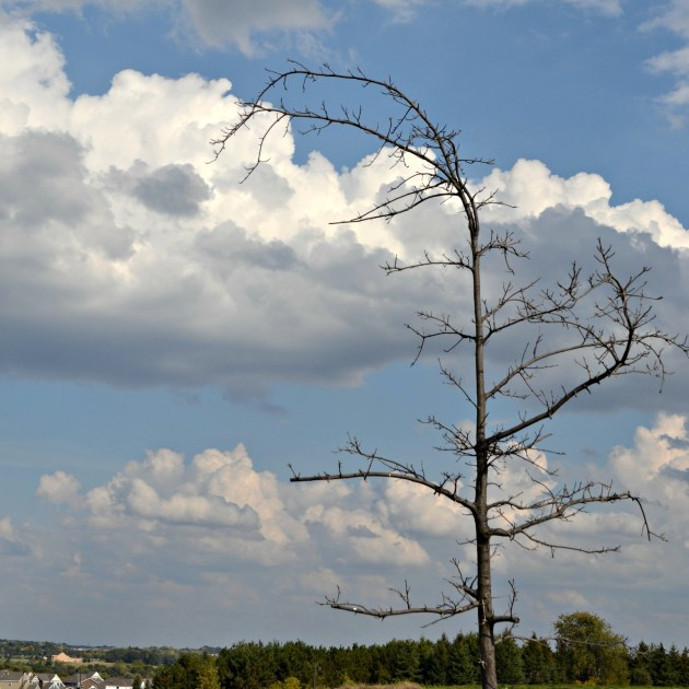 Some trees are bare, stark against the sky