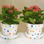 Polka Dot Fingerprint Flower Pot