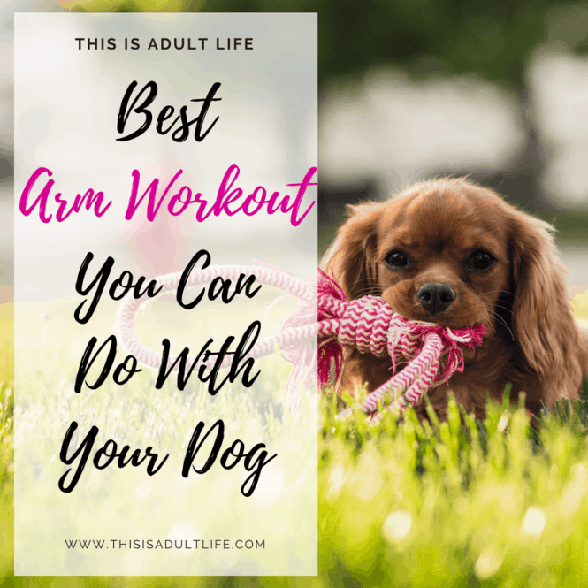 Best Arm Workout You Can Do With Your Dog