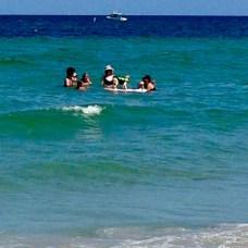 day surf dog
