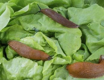 control slugs