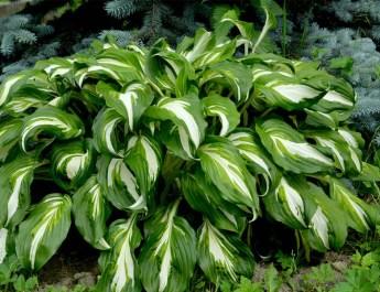 shade loving plants