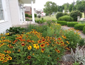 Tricia's Home Grown Prairie Garden – A Gorgeous Display Of Native Color