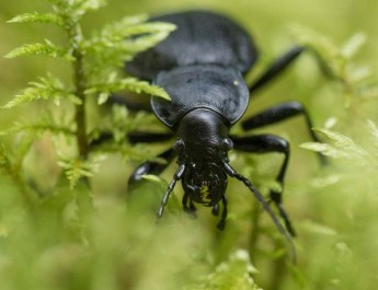 beneficial insects