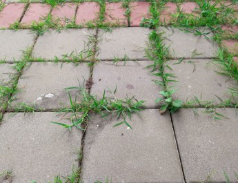 safely control weeds