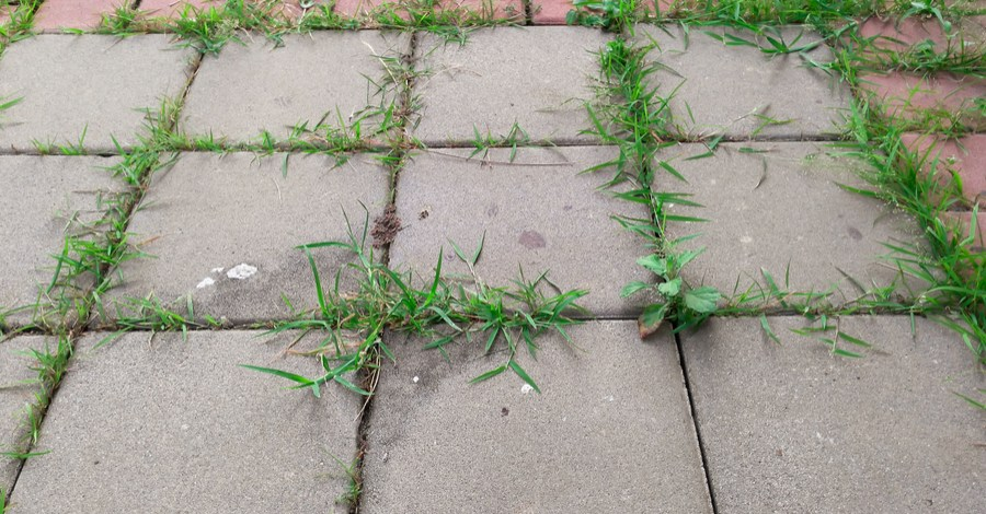 How To Safely and Effectively Control Weeds In Driveways and Patios