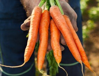 Growing Carrots – How To Plant And Grow A Great Crop!