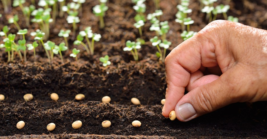 Succession Planting – How To Get More From Your Garden!