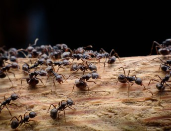 How To Stop Ants Naturally – 3 Great Methods For Outdoor Control!