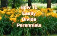 How To Divide Perennials In Late Summer And Fall – Create More Plants!