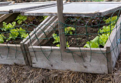 using cold frames