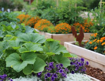 growing flowers with vegetables