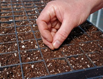 Starting Seeds Indoors – 5 Big Tips To Grow Your Own Plants This Year!
