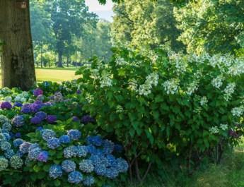 Shade Loving Perennials – Plants To Grow Where The Sun Doesn't Shine
