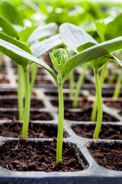 start vegetable seeds indoors