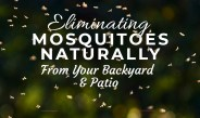How To Eliminate Mosquitoes Naturally From Your Backyard And Patio