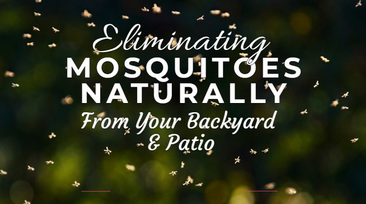 eliminate mosquitoes