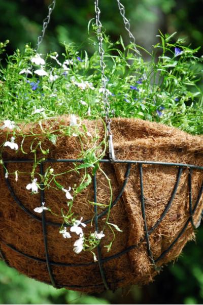 replant hanging baskets