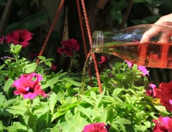 fertilize hanging baskets
