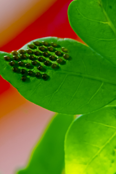 How To Get Rid Of Squash Bugs From Your Garden - This Is ...
