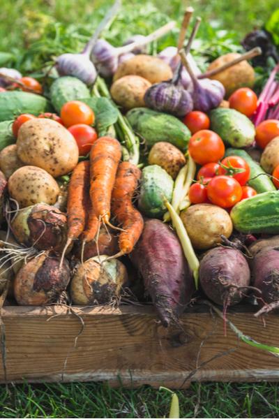create a fall vegetable garden