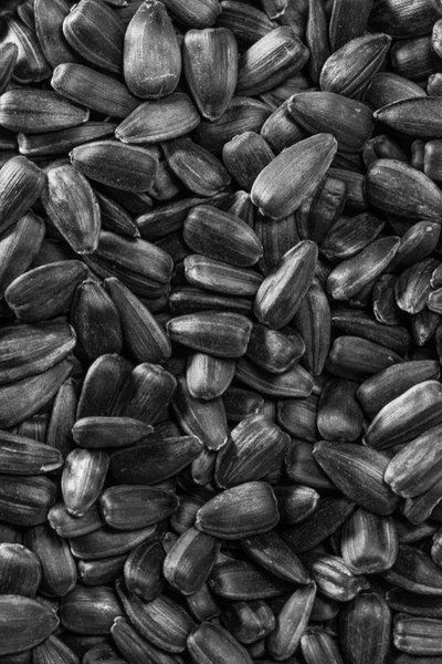black oil sunflower seeds - homemade bird seed
