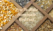 Homemade Bird Seed  – How To Make Nutritious, Low-Cost Feed At Home!