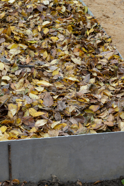 leaves in the garden