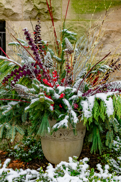 Add Winter Interest To Your Flowerbeds And Gardens