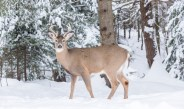 How To Prevent Wintertime Deer Damage To Your Landscape
