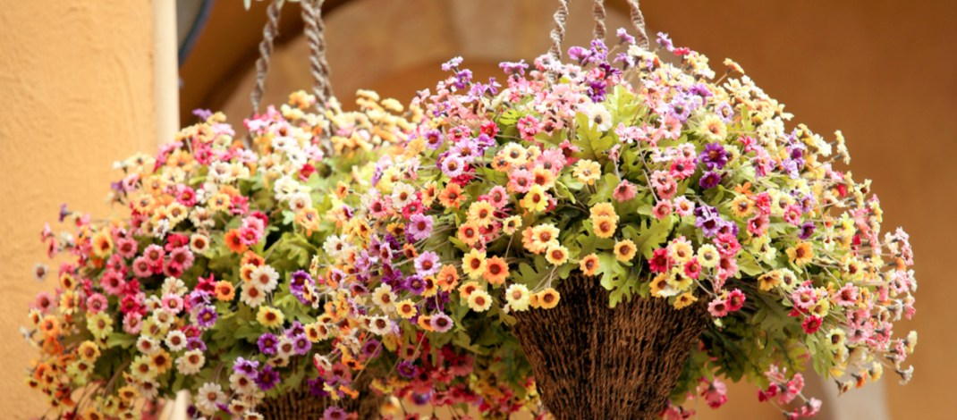 hanging baskets from seed
