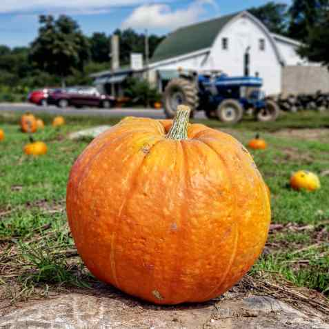 whittles-pumpkin