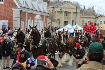 clydesdales-in-mystic